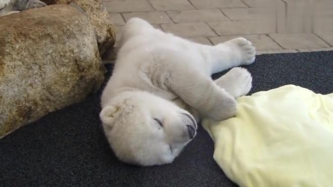 00:25睡觉翻身的小白熊宝宝,超可爱